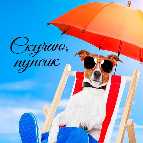 Картинка скучаю пупсик - скачать бесплатно на otkrytkivsem.ru