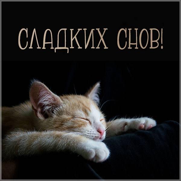 Картинка сладких снов шуточная - скачать бесплатно на otkrytkivsem.ru
