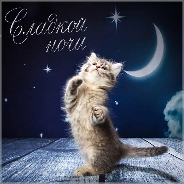 Картинка сладкой ночи смешная - скачать бесплатно на otkrytkivsem.ru