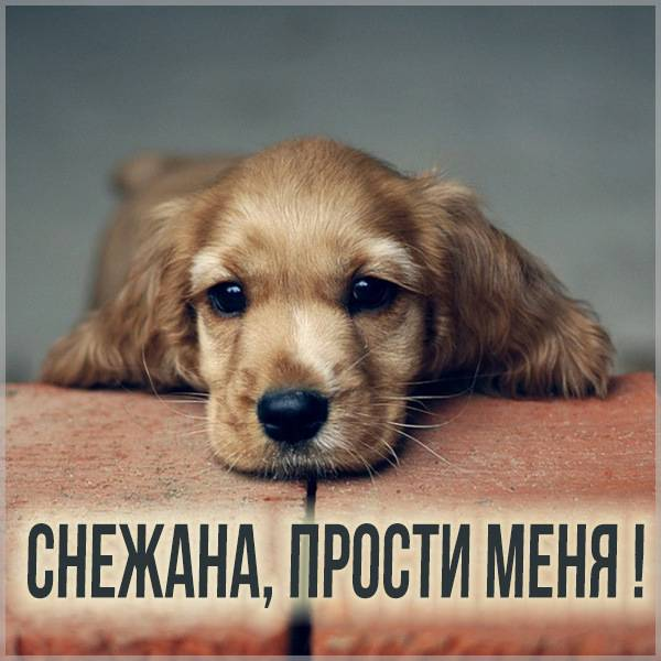 Картинка Снежана прости меня - скачать бесплатно на otkrytkivsem.ru