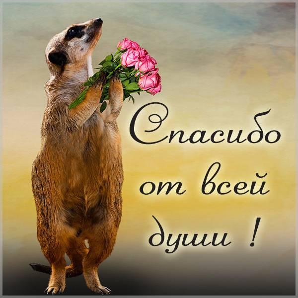 Картинка со словами спасибо от всей души - скачать бесплатно на otkrytkivsem.ru