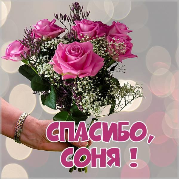 Картинка Соня спасибо - скачать бесплатно на otkrytkivsem.ru