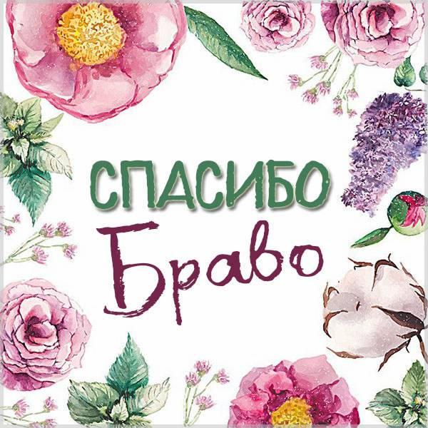 Картинка спасибо браво - скачать бесплатно на otkrytkivsem.ru
