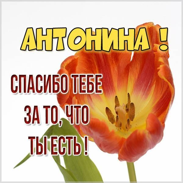 Картинка спасибо что ты есть Антонина - скачать бесплатно на otkrytkivsem.ru