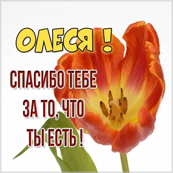 Картинка спасибо что ты есть Олеся - скачать бесплатно на otkrytkivsem.ru
