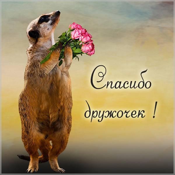 Картинка спасибо дружочек - скачать бесплатно на otkrytkivsem.ru