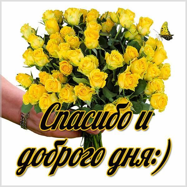 Картинка спасибо и доброго дня - скачать бесплатно на otkrytkivsem.ru