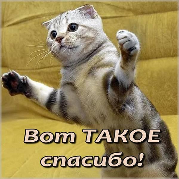 Картинка спасибо прикольная смешная - скачать бесплатно на otkrytkivsem.ru