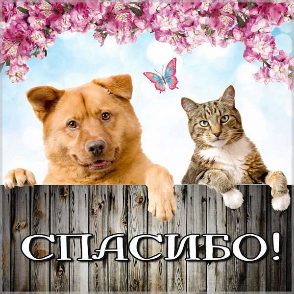 Картинка спасибо с животными - скачать бесплатно на otkrytkivsem.ru