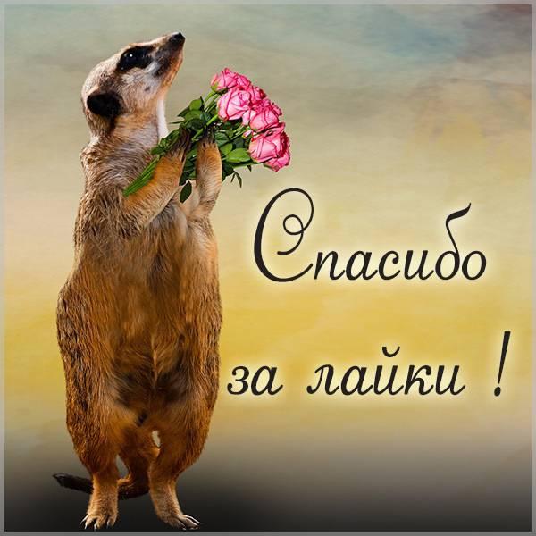 Картинка спасибо за лайки - скачать бесплатно на otkrytkivsem.ru