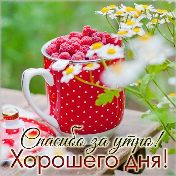 Картинка спасибо за утро хорошего дня - скачать бесплатно на otkrytkivsem.ru