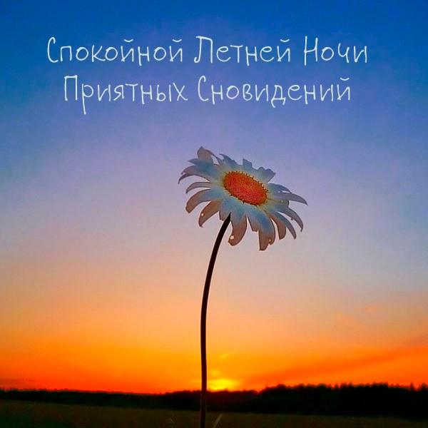 Картинка спокойной летней ночи приятных сновидений - скачать бесплатно на otkrytkivsem.ru