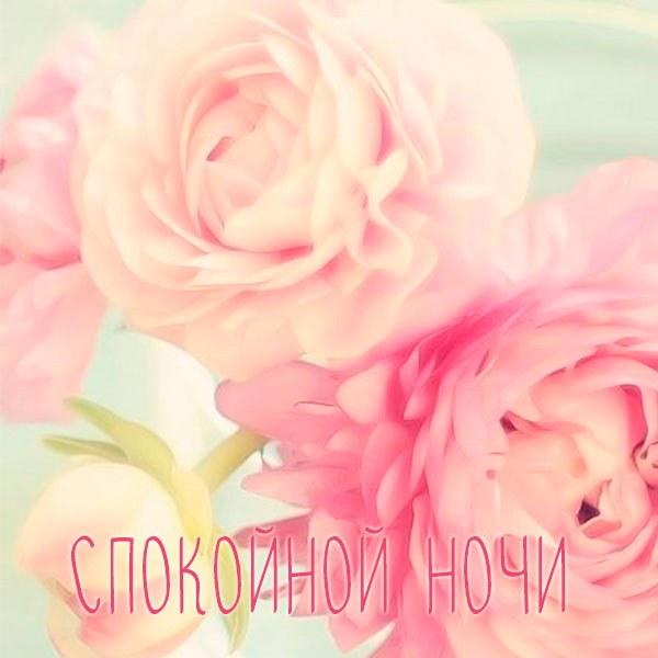 Картинка спокойной ночи красивая интересная новая женщине - скачать бесплатно на otkrytkivsem.ru