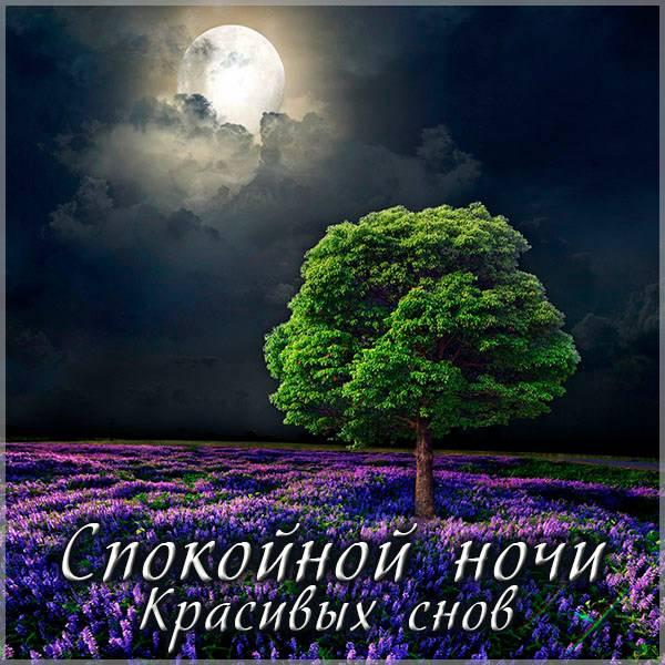 Картинка спокойной ночи красивых снов девушке - скачать бесплатно на otkrytkivsem.ru