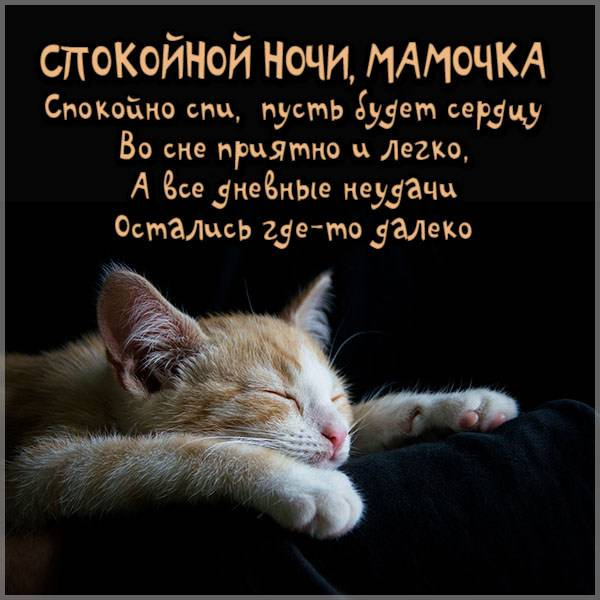 Картинка спокойной ночи мамочка смешная - скачать бесплатно на otkrytkivsem.ru