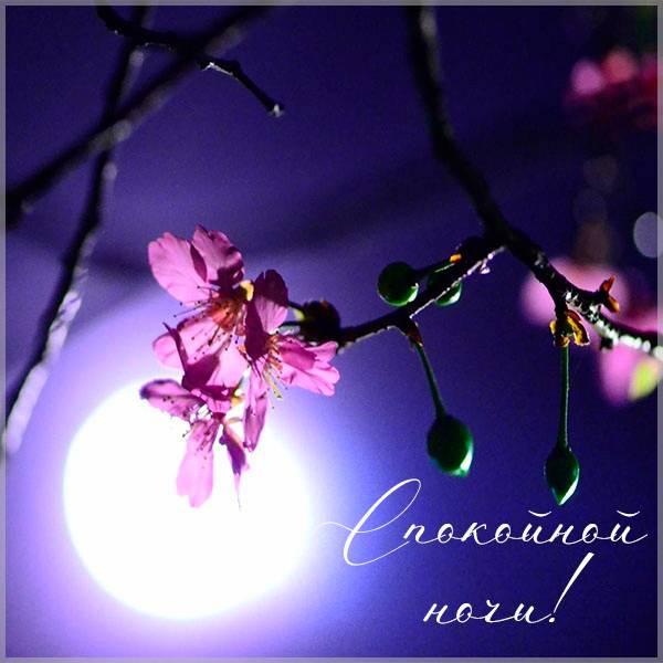Картинка спокойной ночи весенней - скачать бесплатно на otkrytkivsem.ru