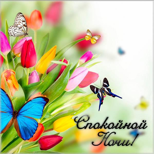 Картинка спокойной ночи весна бабочки цветы - скачать бесплатно на otkrytkivsem.ru