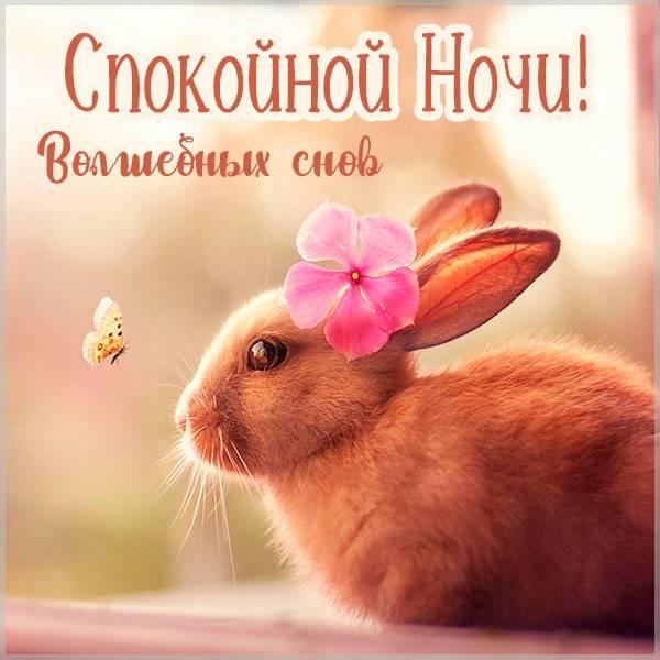 Картинка спокойной ночи весна бабочки заяц - скачать бесплатно на otkrytkivsem.ru