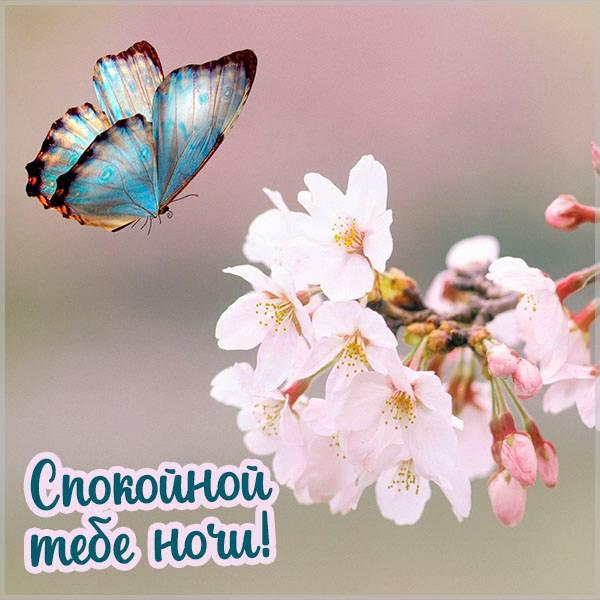 Картинка спокойной ночи весна бабочки - скачать бесплатно на otkrytkivsem.ru
