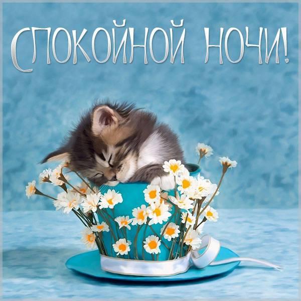 Картинка спокойной ночи женщине прикольная - скачать бесплатно на otkrytkivsem.ru