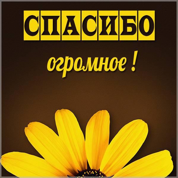 Картинка цветы спасибо огромное - скачать бесплатно на otkrytkivsem.ru