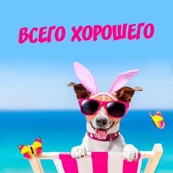 Картинка всего хорошего веселая и позитивная - скачать бесплатно на otkrytkivsem.ru