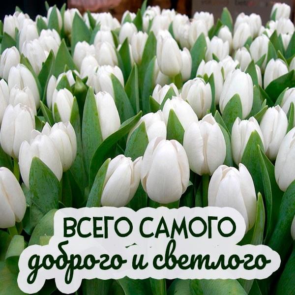 Картинка всего самого доброго и светлого - скачать бесплатно на otkrytkivsem.ru