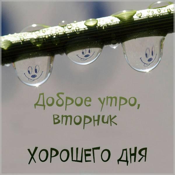 Картинка вторник доброе утро хорошего дня прикольная - скачать бесплатно на otkrytkivsem.ru