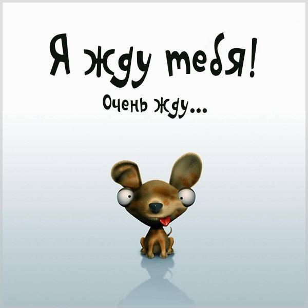 Картинка я жду тебя смешная - скачать бесплатно на otkrytkivsem.ru