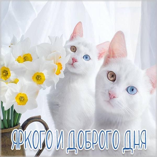 Картинка яркого и доброго дня кошечки - скачать бесплатно на otkrytkivsem.ru