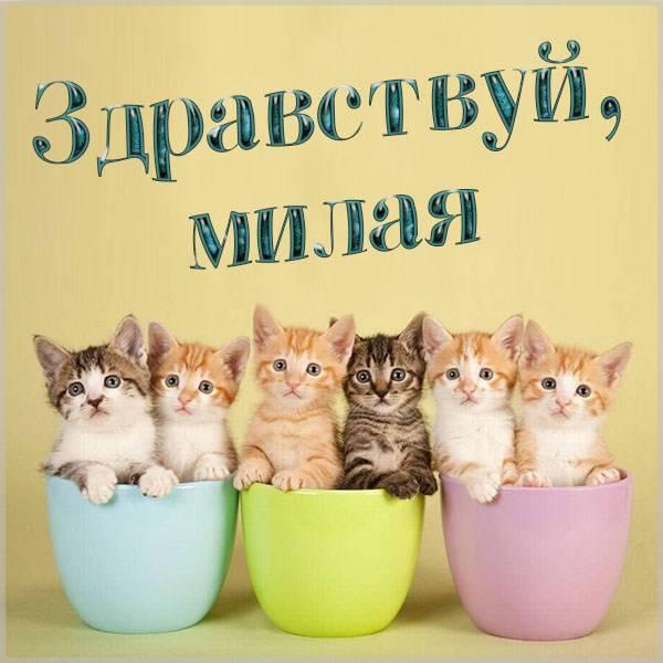 Картинка здравствуй милая - скачать бесплатно на otkrytkivsem.ru