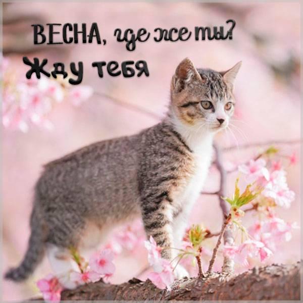 Картинка жду весну прикольная - скачать бесплатно на otkrytkivsem.ru