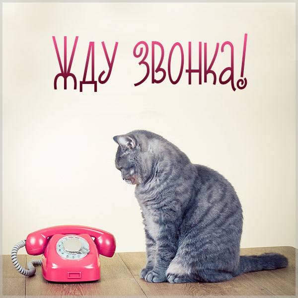 Картинка жду звонка мужчине прикольная - скачать бесплатно на otkrytkivsem.ru