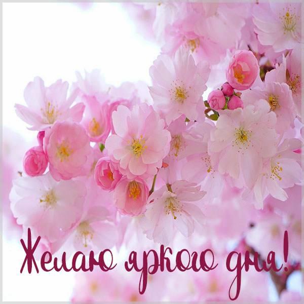 Картинка желаю яркого дня - скачать бесплатно на otkrytkivsem.ru