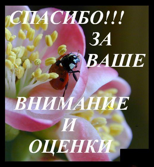 Картинки спасибо за оценки и внимание - скачать бесплатно на otkrytkivsem.ru