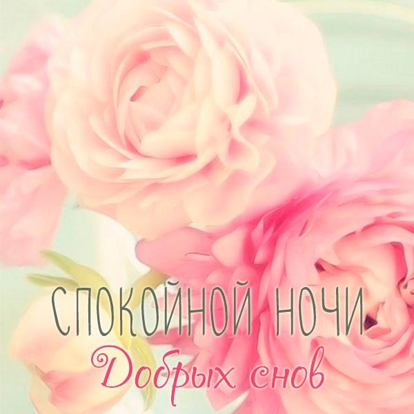 Классная картинка спокойной ночи девушке - скачать бесплатно на otkrytkivsem.ru
