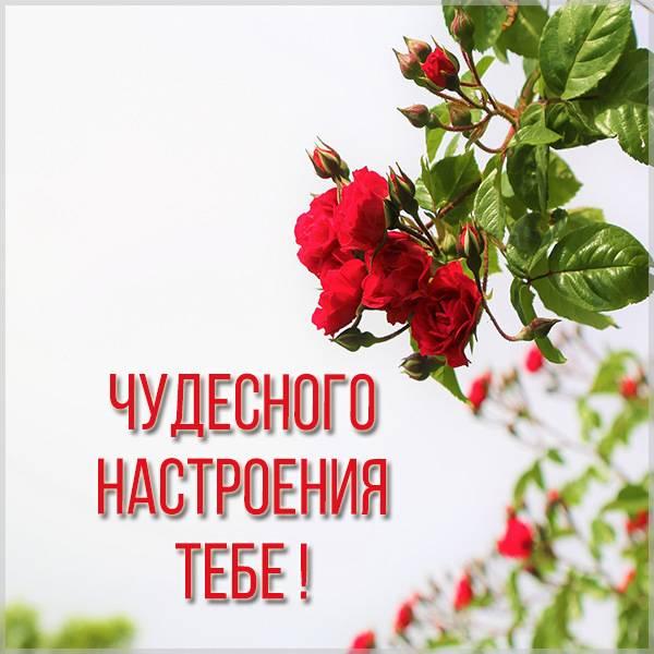 Красивая картинка чудесного настроения - скачать бесплатно на otkrytkivsem.ru