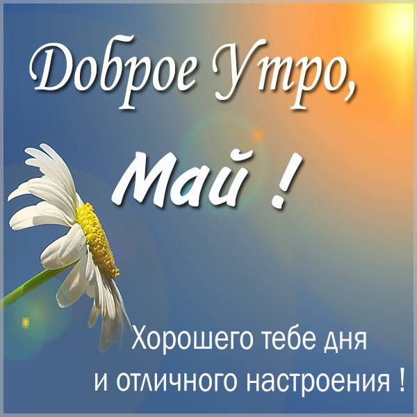 Красивая картинка доброе утро Май - скачать бесплатно на otkrytkivsem.ru