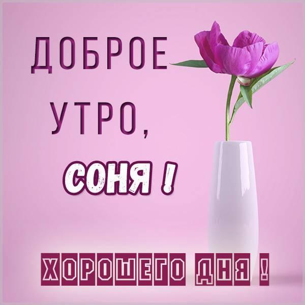 Красивая картинка доброе утро Соня - скачать бесплатно на otkrytkivsem.ru