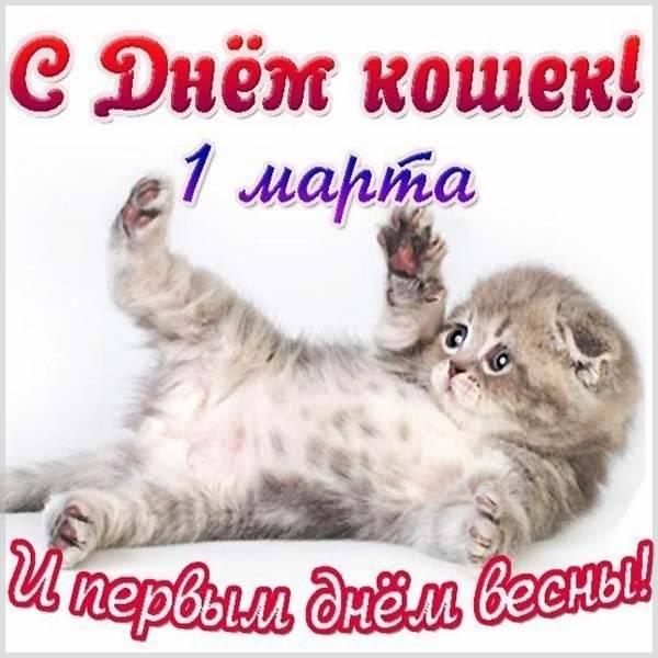 Красивая картинка на день кошек - скачать бесплатно на otkrytkivsem.ru
