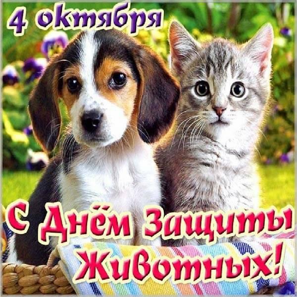 Красивая картинка на день защиты животных - скачать бесплатно на otkrytkivsem.ru