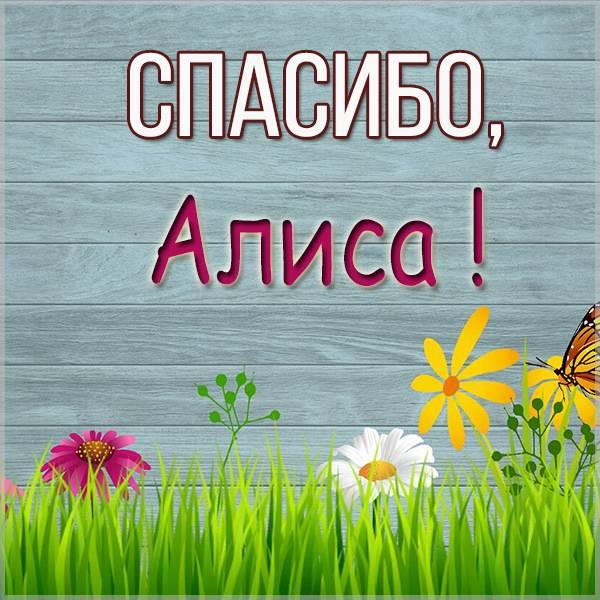 Красивая картинка спасибо Алиса - скачать бесплатно на otkrytkivsem.ru