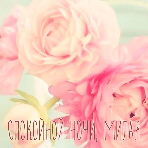 Красивая картинка спокойной ночи милая - скачать бесплатно на otkrytkivsem.ru