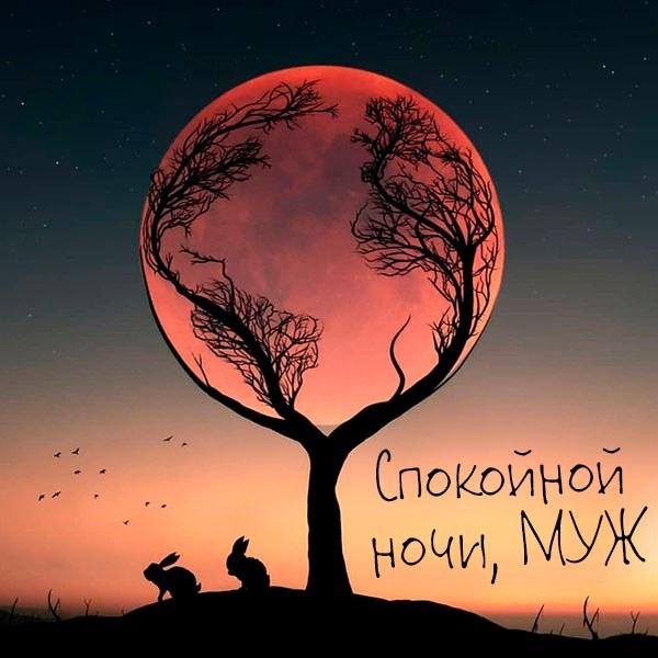 Красивая открытка мужу спокойной ночи - скачать бесплатно на otkrytkivsem.ru