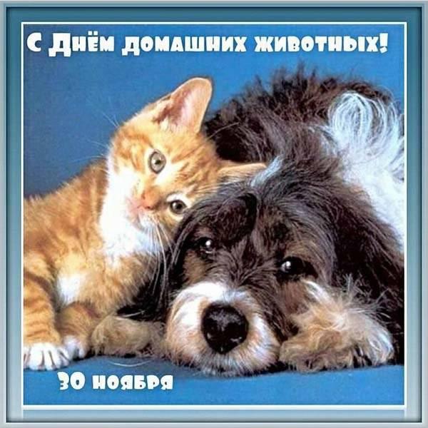 Красивая открытка с днем домашних животных - скачать бесплатно на otkrytkivsem.ru