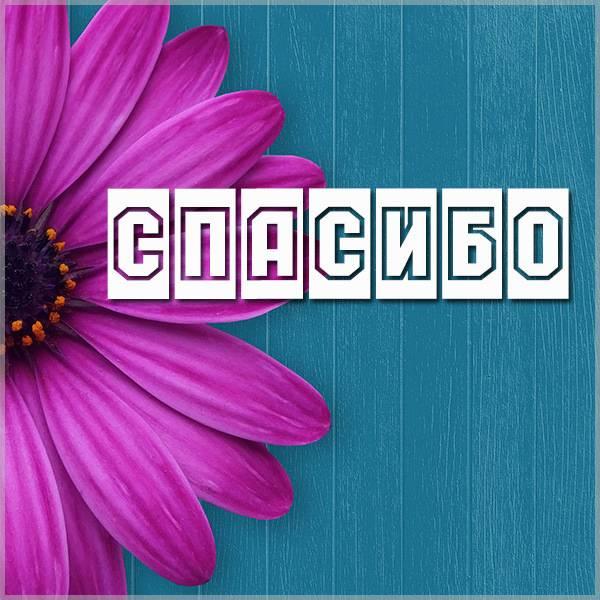 Красивая открытка с цветами спасибо - скачать бесплатно на otkrytkivsem.ru