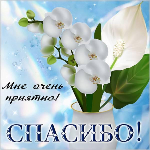 Красивая открытка спасибо мне очень приятно - скачать бесплатно на otkrytkivsem.ru