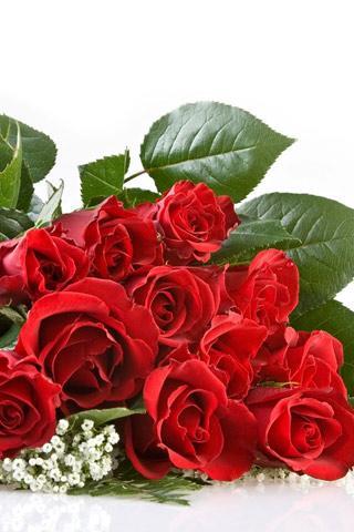Красные розы - скачать бесплатно на otkrytkivsem.ru