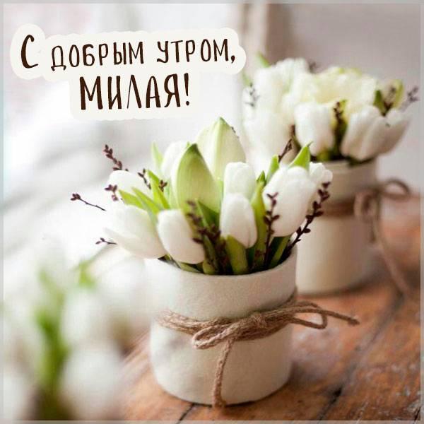 Милая открытка с добрым утром девушке - скачать бесплатно на otkrytkivsem.ru