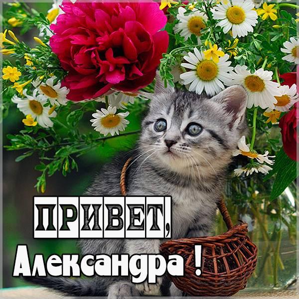 Открытка Александра привет - скачать бесплатно на otkrytkivsem.ru